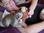 красивого ребенка капуцин обезьян готовы
