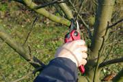 ОБРЕЗКА плодовых деревьев и кустарников,  средства защиты растений